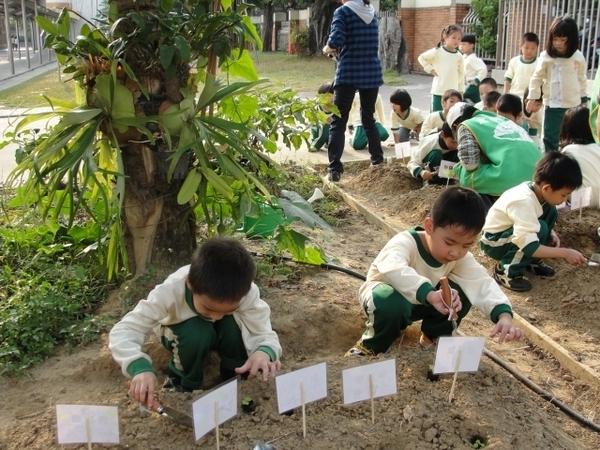 幼儿园手工制作布偶图片蔬菜