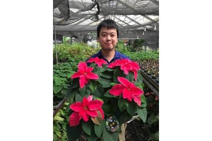 中興大學園藝學系花卉創新育種研究室助理教授陳彥銘抱著團隊研發的耶誕紅新品種「女神」,預計明年底量產上市。