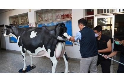 興大獸醫學系主任陳鵬文(左)示範乳牛接生