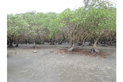 竹圍紅樹林