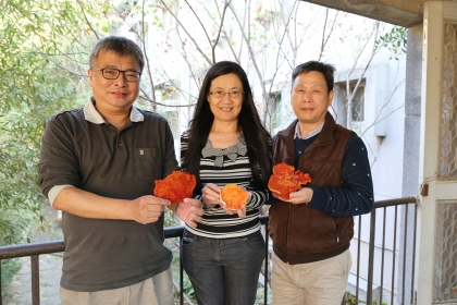 中興大學森林學系特聘教授王升陽(左)、生醫所教授闕斌如(中)和獸醫學院教授廖俊旺(右)合組團隊發現樟芝酸A可制乳線癌腫瘤