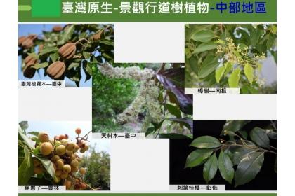 適合做為中部地區行道樹的臺灣原生植物。