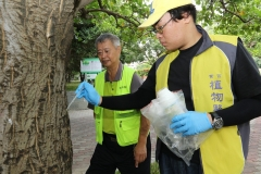 【媒體報導】興大研究防樹蟲 「樹幹注射法」搶救百棵刺桐