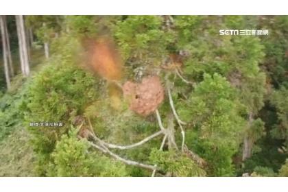 空拍機遭蜂群集體攻擊導致鏡頭快速晃動。(圖/翻攝自李璟泓臉書)