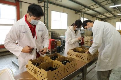 【新頭殼】金門雛雞孵化後,由興大動科系團隊注射疫苗。   圖:中興大學提供
