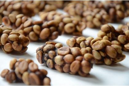【聯合報】麝香貓吃咖啡生豆,排泄後形成貓屎咖啡豆。圖/中興大學提供