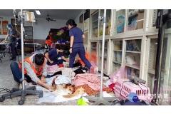 【媒體報導】降低流浪犬貓數量 中市今年助2418隻毛孩完成絕育