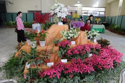 新興花卉區展出13款由農試所及各農改場育種的罕見花卉