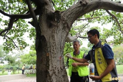 興大幫樹「打針」,助百餘顆病樹重現生機開花。(記者蘇孟娟攝)