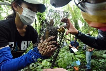 日月光與興大食蛇龜保育團隊培育新血輪,保育食蛇龜。 圖/日月光環保永續基金會提供