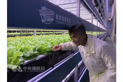 位於桃園的源鮮智慧農場占地約800坪,日產量達1.6噸,將成為台灣第一家在英國設廠的植物工廠。圖為董事長蔡文清仔細檢查園內蔬菜。中央社記者李欣穎攝