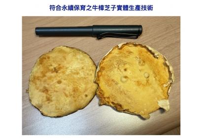 中興大學與台灣利得生物科技產學聯合研發中心在牛樟芝子實體的生產技術獲得重大的突破。