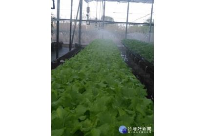 農場採用以色列的滴灌系統