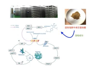 固態培養牛樟芝成分安卓錠C作用示意圖
