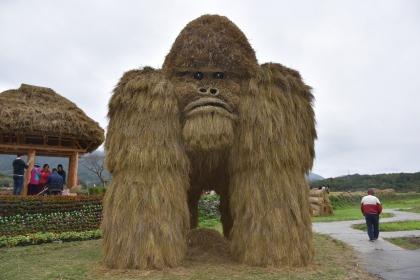 富里鄉農會稻草藝術節中,最大的作品「銀背猩猩」高1樓半,由中興大學團隊製作,成為打卡景點。圖/報系資料照