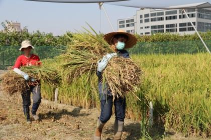 興大特殊選才 10農業學系(組)優先錄取農家子弟