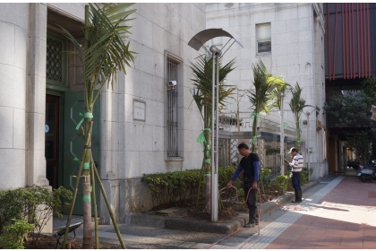 彰化銀行舊總行屬市定古蹟,外牆的椰子樹成排被砍除;彰銀表示,部分樹幹中空才移除,已補植同樹種。記者洪敬浤/攝影