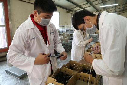 金門雛雞孵化後,由興大動科系團隊注射疫苗。