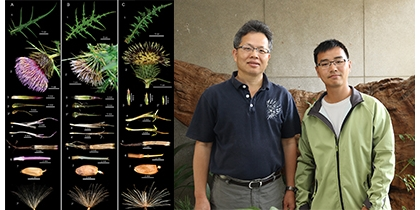 【公關組】千元鈔票植物不是玉山薊?興大森林系研究正名「塔塔加薊」