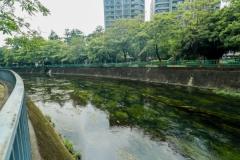 【媒體報導】綠川經驗延伸 中市府攜手興大打造「水岸大學城」