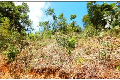 台中市林業生產合作社在新社區大南段8公頃餘的租地上伐木造林,引發台灣護樹團體質疑。東勢林管處強調,林地伐採如同農作物收成,但重新造林會逐步回復。(記者歐素美翻攝)