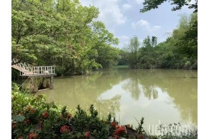 中興大學新化林場沖瀜池在乾旱期間,仍蓄水滿滿。記者吳淑玲/攝影