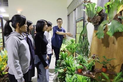 鹿角蕨長達2公尺,是展場內值得一看的植物。