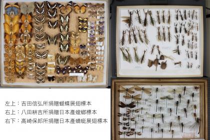 三人所捐贈的昆蟲標本。