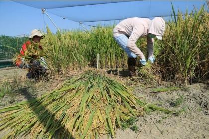 【教育廣播電台】興大特殊選才 10農業學系(組)優先錄取農家子弟