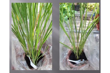 植物生長對照圖
