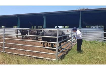 中興大學昆蟲系杜武俊教授赴首爆病例的縣畜試所種牛牧場及各新增疑畜的養牛場採集病媒送檢。(縣府提供)