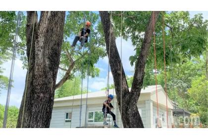 中興大學新化林場攀樹體驗,吸引小朋友參加。記者吳淑玲/攝影