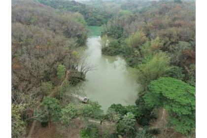 中興大學新化林場沖瀜池是一座農塘。圖/新化林場提供