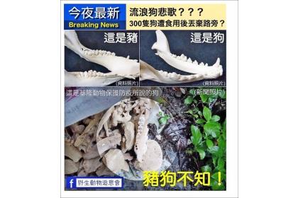【自由時報】「野生動物追思會」發文指基隆動防所「指豬為狗」,動防所長則強調確實有狗骨。