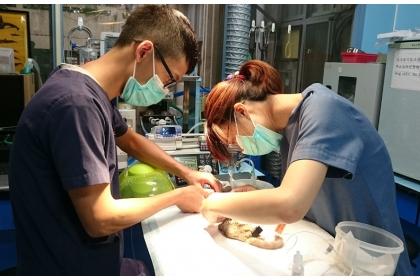 現代獸醫師需具備全方位不同動物的醫療專業能力。