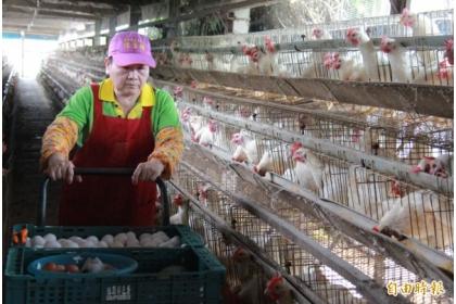 蛋農教育訓練開跑。(資料照,記者陳冠備攝)