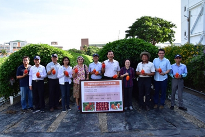 國內第一個命名的原生種木虌果「台東1號」通過命名。(台東農改場提供)