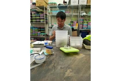 邱俊禕博士後研究員於白蟻飼養室中進行白蟻耐鹽測試實驗。