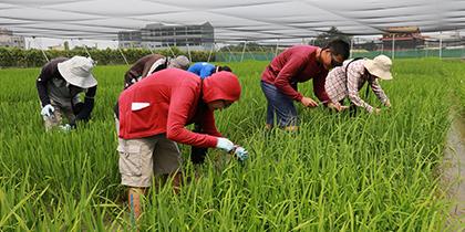 【公關組】興大特殊選才 10農業學系(組)優先錄取農家子弟