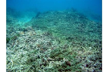 【中國時報】墾丁白化珊瑚。(中興大學生科系教授林幸助提供)
