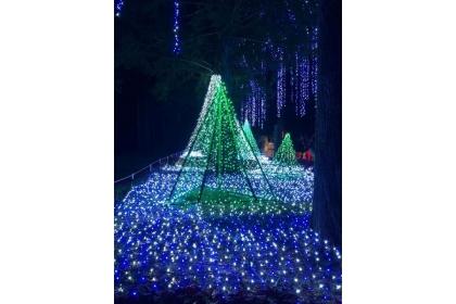 【自由時報 】「希望之樹」下方也由五彩繽紛的燈海點綴,美不勝收。