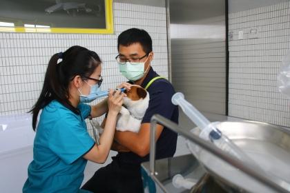為搜救犬無償診治 興大USR「浪愛齊步走」提升動物福祉