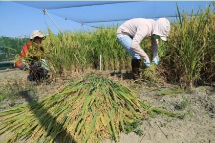 【自由時報】鼓勵青年加農,興大特殊選才農家子弟可優先錄取。(中興大學提供)