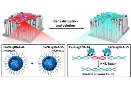 超分子奈米顆粒介導CRISPR / Cas9系統的傳輸