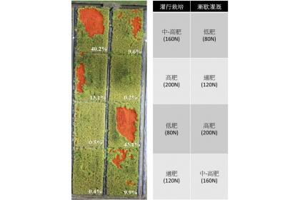 空拍影像快速調查並分析倒伏災損面積與比例。(圖片來源:農試所提供)