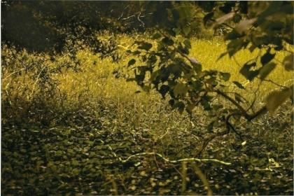 【聯合報】中興大學新化林場螢火蟲以黃緣螢為主,螢光閃爍較慢,拍出來是一條線。 圖/許麗娜提供