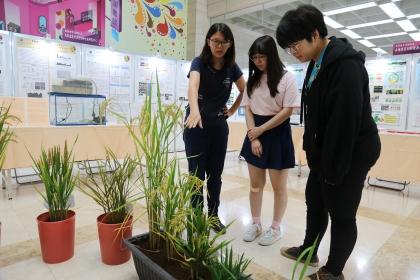 「高教深耕計畫特色領域研究中心暨USR成果展」展示分子育種抗逆境水稻