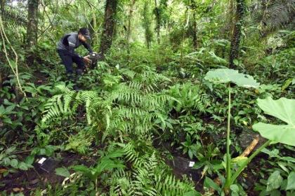 食蛇龜保育團隊放置誘捕籠。 圖/日月光環保永續基金會提供