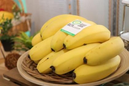 【農傳媒】取得「香蕉良好農業規範(TGAP) 2020 PLUS」驗證之臺灣蕉,將可供應東奧選手村使用。(圖片提供/農糧署)