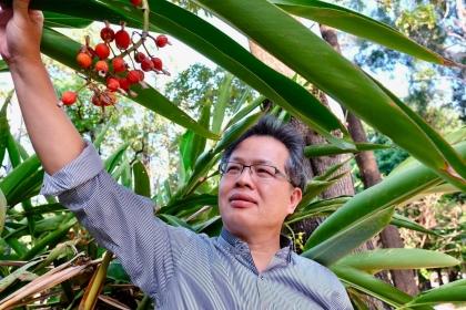 中興大學森林系教授曾彥學與他在校內種植的月桃(攝影_蔡佳珊)